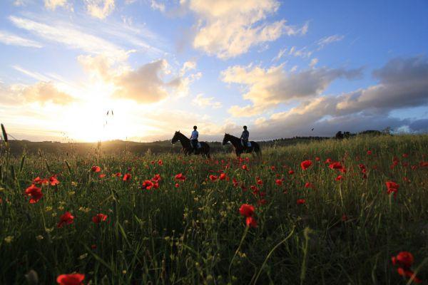 Equitazione di base e passeggiate a cavallo nella campagna toscana